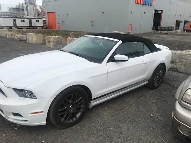 1-mustang-blanche-small